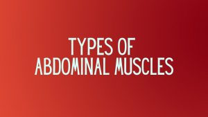 Read more about the article Abdominal Muscles and Their Types