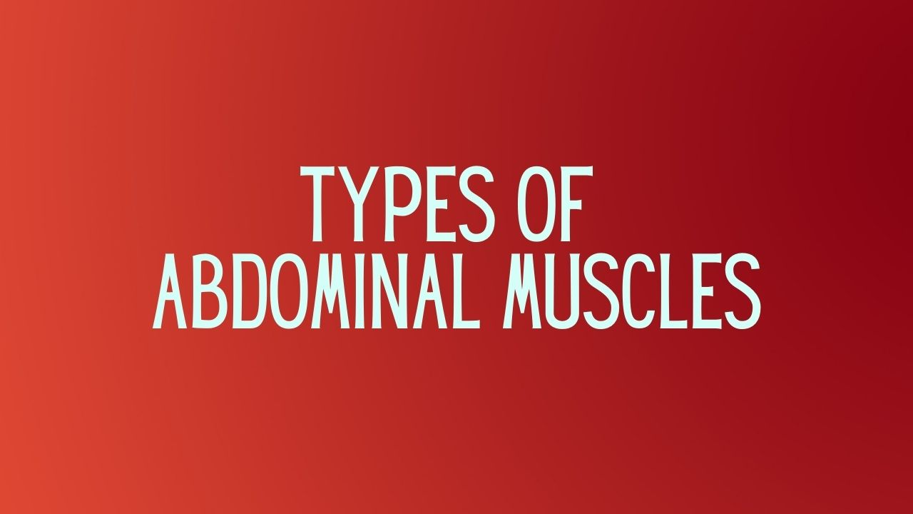 You are currently viewing Abdominal Muscles and Their Types